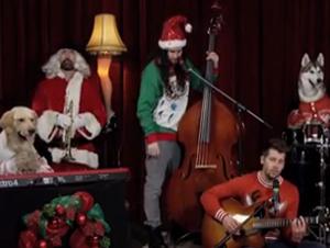 """Grupo Musical de Perritos Toca """"El Niño del Tambor"""" – Tan Bello. ¡Tiene que Verlo!"""