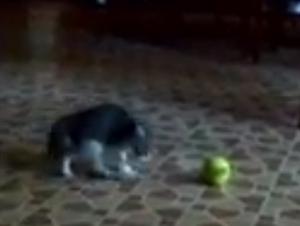 Usted Creía Saber lo que Era Lindo, Pero Espere Hasta que Vea este Video de Gatito Simplemente Hilarante