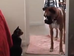 La Lucha Épica Entre Perros y Gatos Continúa – Videos Divertidos