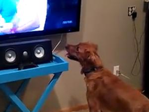 Usted no Encontrará un Mejor Aficionado de Deportes que Este Cachorro Emocionado