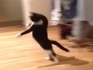 A los 15 Segundos de Este Video de Gato, ¡Usted Se Reirá Tanto!