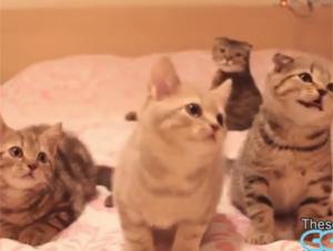 Hilarantes Gatos que bailan – alegrarán su día