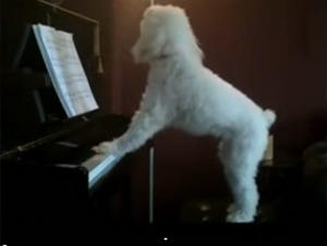Cuando los humanos están fuera, este cachorro aprovecha la casa