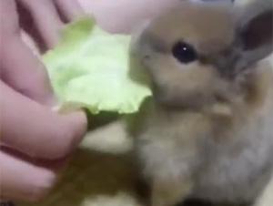Tantos Conejitos, No Puedo Dejar de Ver…¡Demasiada Lindura!