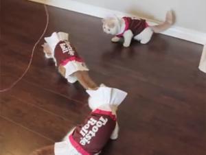 Gatitos Vestidos Como Chiclosos de Chocolate Le Deleitarán