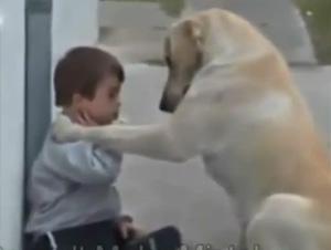 Perro Cuida a Su Niño Humano– ¡Y Tiene  Que Ver Cómo Ganó Su Corazón!
