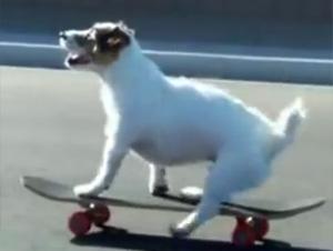 Este Perro Hace de Todo – ¡Simplemente Genial!