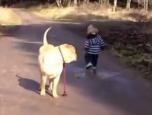 Este Perro Lleva a Pasear a su Niño – ¡Ay, Demasiado Hermoso!