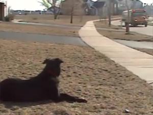 Este Perrito Espera el Autobús Escolar Todos los Días.  ¡Lo Que Pasa Después es Realmente Increíble!