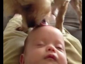 Este Perrito Tiene una Manera Inusual de Poner su Bebé a Dormir. ¡Y es Precioso!