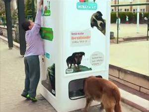 Cómo Usan la Basura Para Cuidar de los Perros Sin Hogar Me Dejó Impactado. ¡Usted Tiene que Ver Esto!