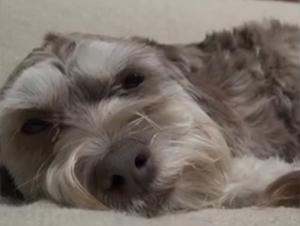Este Pobre Perro Estaba Agotado y Asustado. ¡Pero Este Dramático Rescate Tuvo el Final Más Dulce!