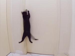 Lo que Hace este Gatito a Continuación es Más que Impresionante, es Épico. ¡Quisiera que Mi Gato Hiciera Esto!