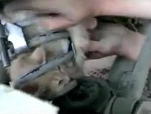 Sólo un Rescate Dramático Podría Salvar a Este Gatito tan Peligrosamente Atorado. La Verdadera Acción Comienza en el 4:50.