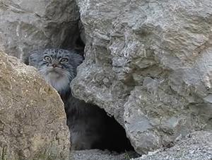 Este Gatito Acaba de Espiar Algo Inusual. ¡Y lo Que Hace a Continuación Realmente me Hizo Reir!