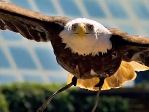 ¡Guau! Esta Increíble Reflexión del Águila Me Impactó Profundamente – ¡Renovarse o Morir!