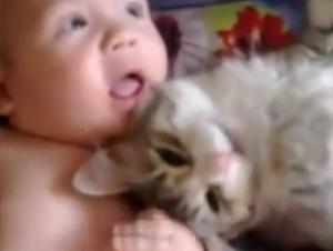 Cómo Este Gatito Recibió al Nuevo Miembro de la Familia le Sorprenderá – ¡Y lo Mejor es la Preciosa Reacción del Bebé!