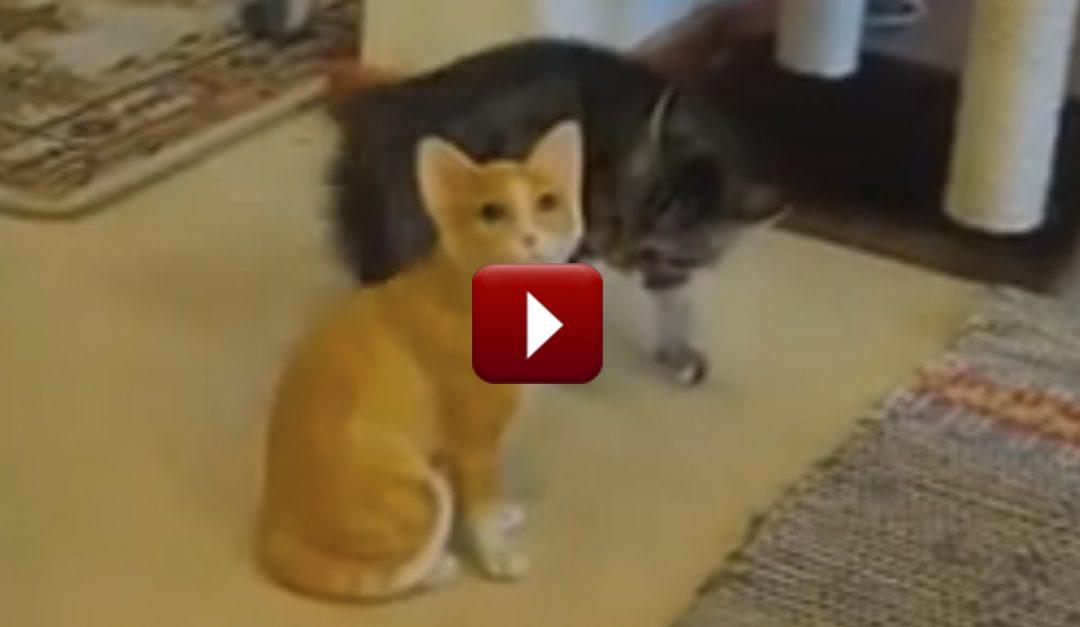 La Verdad Acerca del Primer Gato es Bastante Simple. Pero el Gatito Gris se Sorprendió Completamente. ¡Risa Preciosa!
