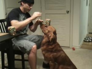 No Tengo Idea Cómo Este Perro Llegó a Ser Tan Paciente – Pero al 3:29, ¡Todo Valió la Pena!