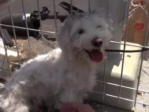 Este Pobre Perro Estaba a Centímetros de la Muerte Y Aterrorizado de los Humanos. ¡Rescate Dramático!