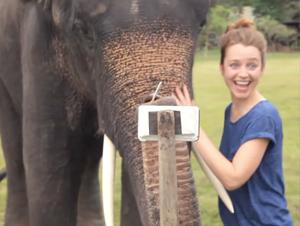Lo que Este Elefante Hace con un Teléfono Celular es Increíble. ¡Apenas Puedo Encender el Mío!