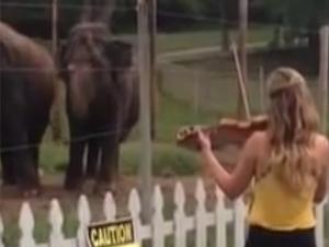 Lo que Estos 2 Amigos Elefantes Hicieron Me Pasmó. ¡Necesitaba Hoy Esta Fantástica Sorpresa!