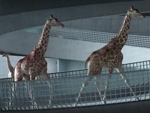 Puede que la Verdad de Estos Animales Sea Diferente a lo que Espera. ¡Pero Su Sorpresa es Hilarante!