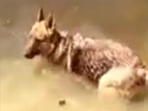 ¿Quién Más Se Ha Sentido Así? Al Parecer, ¡Este Dulce Cachorro Se Divertía Demasiado Para Irse!