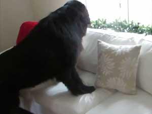 Esta Dulce Niña Tiene el Mejor Compañero Para las Escondidas – ¡Su Perro! Y No Podría Ser Más Lindo