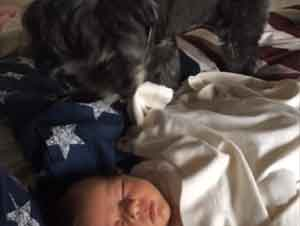 Un Servicial Perro Acomoda al Bebé Para Su Siesta – ¡Ay!!!