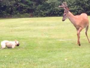 Feliz Cachorro Encontró un Improbable Nuevo Mejor Amigo. – ¡Verlos Jugar es Tan Bello!