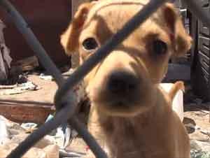 Familia De Perros Desesperada Obtiene Un Rescate Precioso