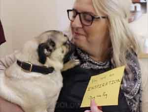 Este Perrito Anima a las Personas con Mensajes Inspiradores Alrededor de la Ciudad – Videos Lindos