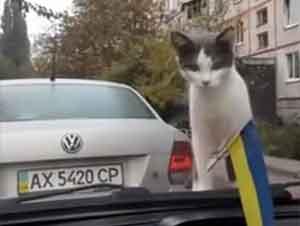 Un Gatito Muy Curioso Se Lleva La Sorpresa De Toda Su Vida – ¡Qué Gracioso!