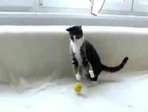 Cuando Este Gatito Juega Hace Cosas Ridículamente Lindas. ¡Nunca He Visto Tanta Lindura!
