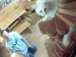 Le Diagnosticaron Autismo A Los 49 Años Y Convirtió Su Hogar En Algo Asombroso Para Sus Mascotas