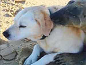 Esta Amistosa Foca Abraza A Un Perro En La Playa y Sorprende a Todos – ¡Demasiado Lindo!