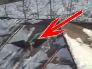 Un Inteligente Cuervo Hace Algo Impresionante Después de la Primera Nevada – ¡Tiene Que Ver Esto!