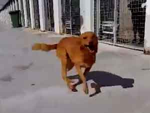 ¡Perros Muestran ALEGRÍA Al Encontrar Al Fin Sus Hogares!