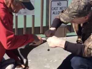 Hombre Valientemente Hace ESTO para Rescatar a un Pelícano Hambriento – ¡GUAU!