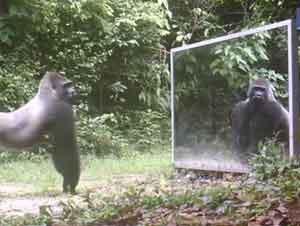 Vea Cómo Reaccionaron Estos Animales de la Selva Cuando se Vieron en un Espejo por Primera Vez