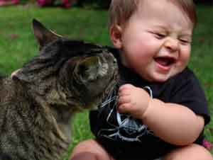 Mejor Colección de Gatos y Bebés Chistosos Jugando Juntos. ¡Espere Hasta el Minuto 6:25!