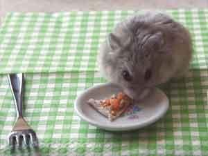 Pequeño Hámster Se Come Una Pizza Miniatura ¡Y Es lo Más Precioso Jamás!