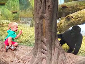 Un Bebé gorila y un niño juegan a las escondidillas.
