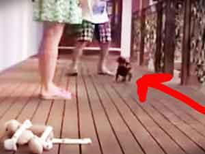 Que nadie se meta con la mama de este pequeño cachorro! LOL
