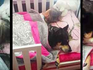 Ella estuvo buscando por todos lados a su perro hasta que finalmente lo encontró en este lugar..