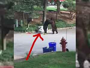 Dos osos se pelan por basura en medio de un callado vecindario
