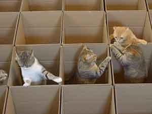 Pequeños gatitos juegan a esconderse entre cajas vacías.