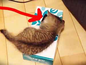 Dos gatos una sola caja!