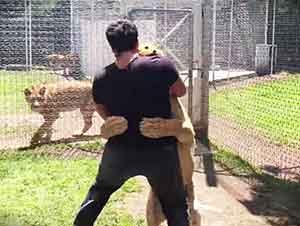 Leona salta y abraza de felicidad al hombre que la rescató.
